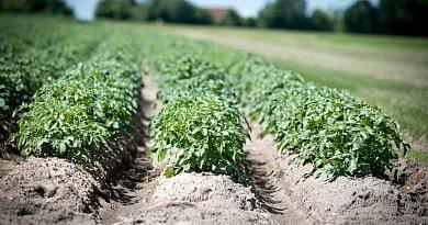 Corteva Agriscience – Lutte contre les ravageurs du sol : Vydate 10 G – SHERPA 0.8 GR