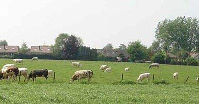 Herbicides pour prairies jeunes et permanentes, sursemis, production de graminées