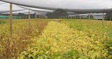 Protealis promet les 'premières variétés locales de soja' d'ici 2022