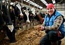 Ceusters et Rozendaal, exploitants laitiers : « Grâce à Selko-TMR, la ration se conserve mieux et plus longtemps.  Et cela se voit dans la prise de nourriture qui est plus importante ! »