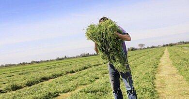 Topgrass : plus d'herbe à l'hectare, et de meilleure qualité